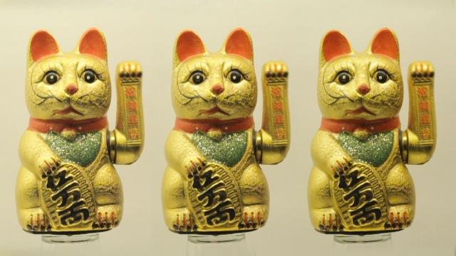 cats_000015