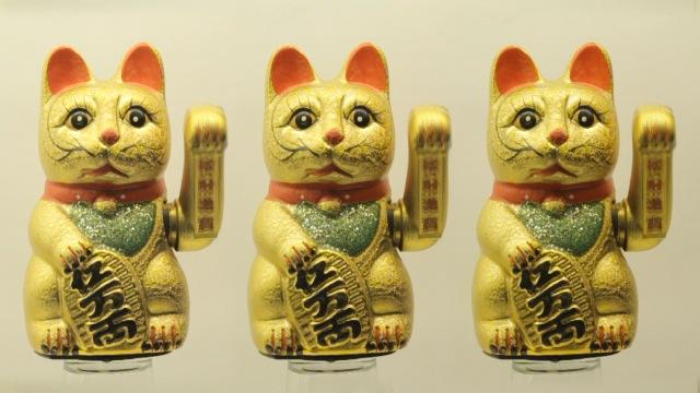 cats_000025